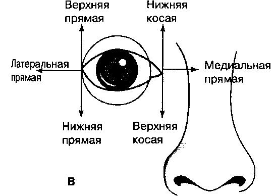 Zemtsova látássérült