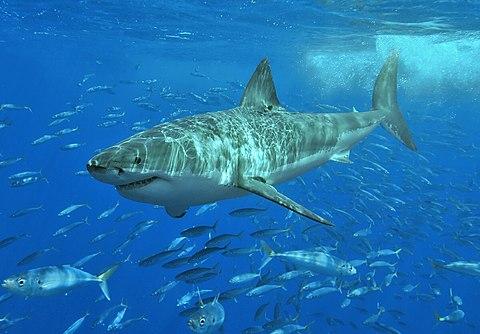 a cápának nincs látása lehet-e ambliópiával javítani a látást?