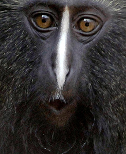 főemlősök látása