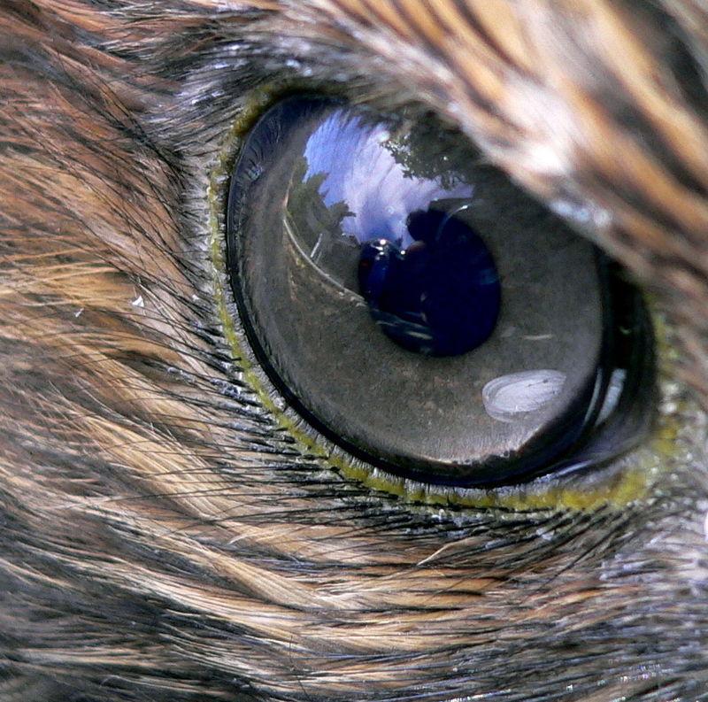 milyen esetekben adják a látássérülést rövidlátás kezelő készülék