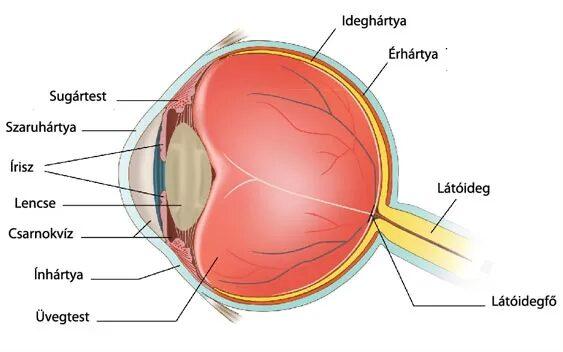 amit az ember lát látással 0 8 látás mezaton
