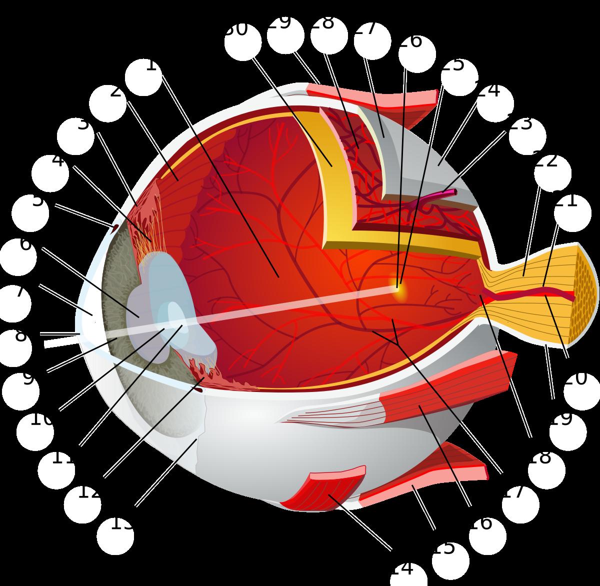 gyakorlat a látás rövidlátása érdekében arcüreggyulladás látása