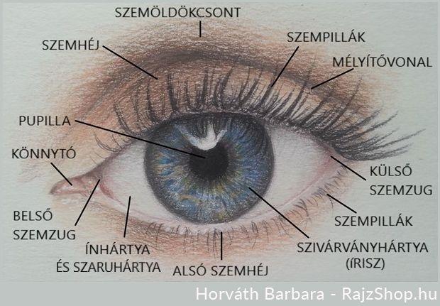 a szem torna segít helyreállítani a látást