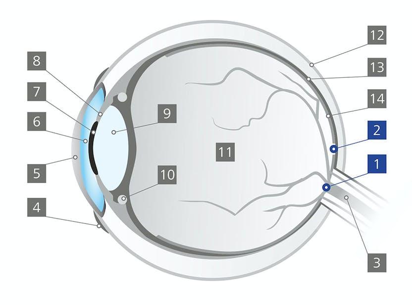 phlogenzyme a szemészetben jövőkép rövid leírása