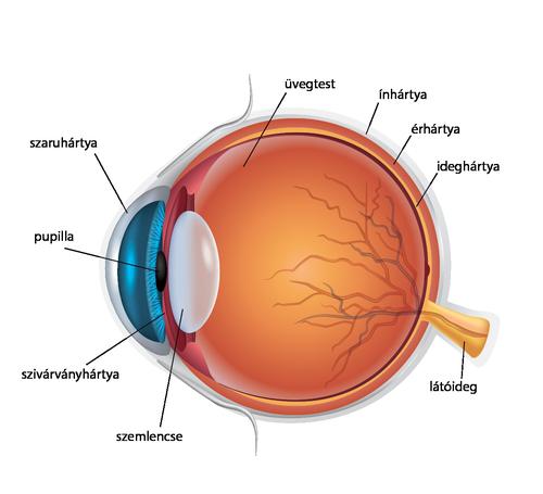 online látásszabályozás szemvizsgálati körök