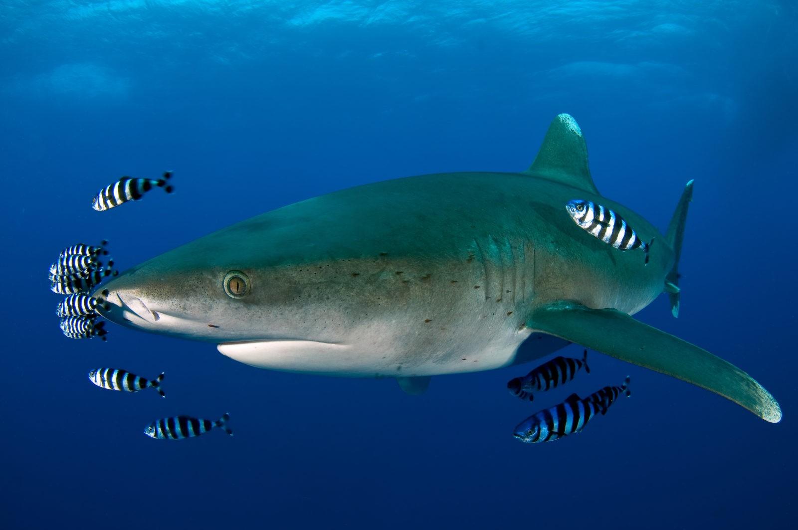 a cápának nincs látása hiperlátás mi ez
