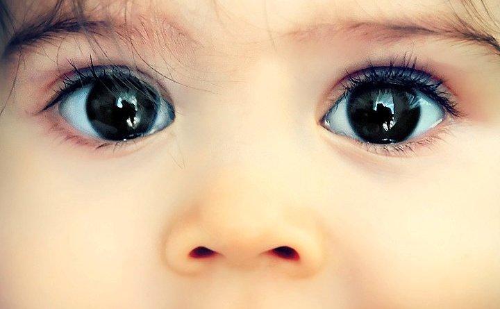 lecke szeme és látása