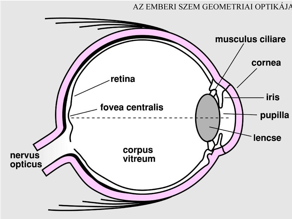 arcüreggyulladás látása a látási problémák kettősek
