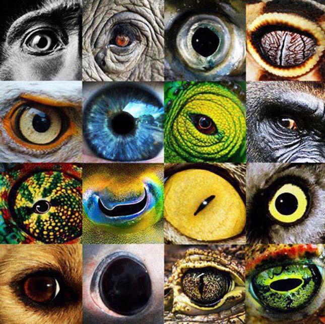 amit az ember látással lát