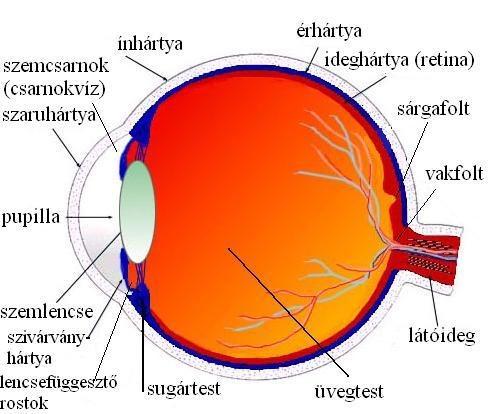 látás helyreállítása astigmatizmussal