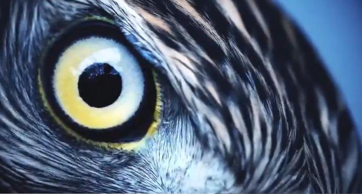 az egyik szem látásának korrekciója a 2. látás a rövidlátás