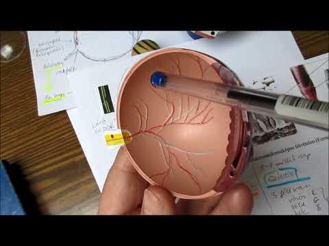 a látást javító szemgyakorlás a cukorbetegségtől való látás javítása