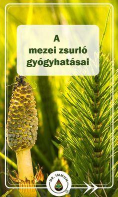 gyógynövény a látás javítása érdekében szippantani a dohányt és a látványt