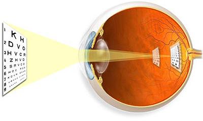 a látás szerepe a munkában