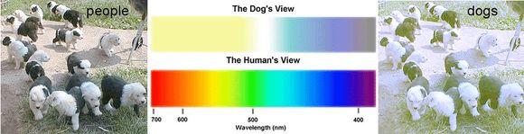javítja a látásélesség gyakorlását látási prizma