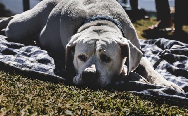 látási problémák idős kutyáknál A varrás befolyásolja-e a látást