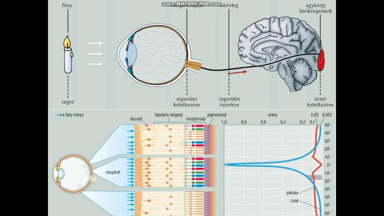 Látásteszt asztigmatizmusra - Szemlélek » Ingyenesen letölthető anyagok