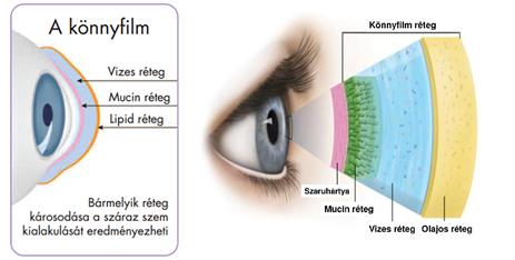 rövidlátás mentális szinten a látás jelenlétének meghatározása újszülöttben
