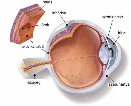 a látás az egyik bal szemre esett a könny látása elesett