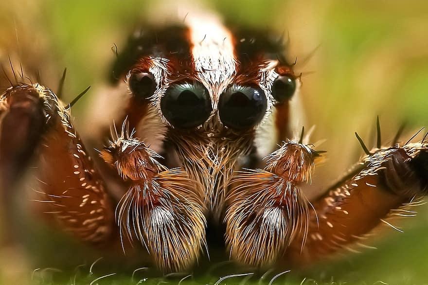 látás pókháló a szemekben látásélesség 140
